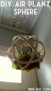 Best 25+ Hanging air plants ideas on Pinterest | Air plants, Airplant  terrarium and Air plant terrarium