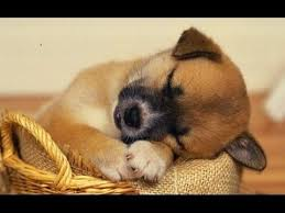 cute baby puppies sleeping. Perfect Puppies These Adorable Baby Animal Pictures Are Guaranteed To Put A Smile On Your  Face Cute Cat Photos Wonderful Dog Images And Other Cute Animals And Baby Puppies Sleeping