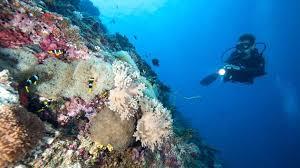 Marine Biologist Working Conditions Job Descriptions Resume Template ...