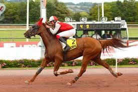 """Résultat de recherche d'images pour """"image de chevaux de course pmu"""""""