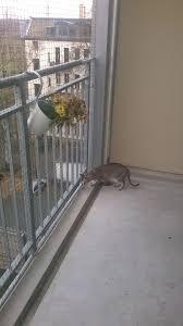 Balkon Katze Katzennetz Balkon Ein Sicheres Gefhl Fr Sie Und Ihre