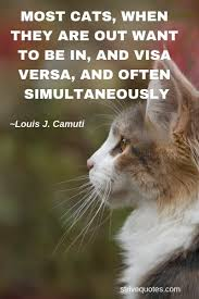 20 Funny Cat Quotes Sayings Images Cat Quotes Funny Cats