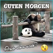 Whatsapp Lustige Guten Morgen Bilder Kostenlos Ribhot V2