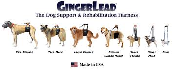 gingerlead dog support harness vetrxdirect blogvetrxdirect blog rh vetrxdirect com dog hip harness diy dog hip harness