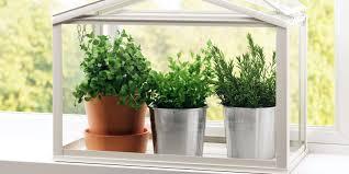 kitchen herb garden windowsill planter with seeds and compost diy kit kitchen herb garden