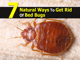 7 Natural Ways To Get Rid Of Bed Bugs