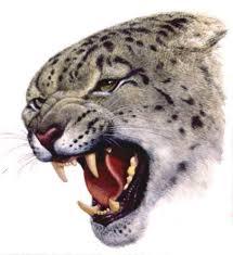 женские эскизы тату пантеры дикие кошки студия художественной