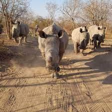 حلبا تجمعنا - شو جمع وحيد القرن ؟