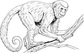 Small Picture Howler Monkey Coloring Coloring Coloring Pages