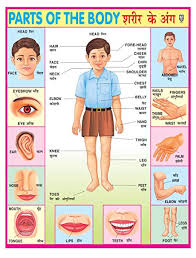 Body Chart Ibd Pre School Durable Parts Of Body Pvc Educational Laminated Wall Chart Poster