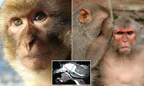 Laser Light To Scare Monkeys Creepy Recording Reveals What Monkeys Would Sound Like If