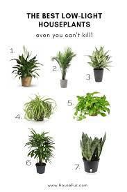 low light houseplants you can t kill
