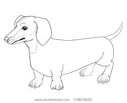 Dachshund Coloring Pages Tag Sausage Dog Colouring Pages Coloring