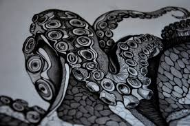 Small Picture Little section of a new octopus Im drawing Full sarah mccl