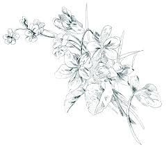 Floral Sketch Designs Free Vintage Image Floral Sketch Old Design Shop Blog