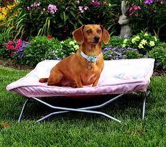Bedroom Fascinating Protect Outdoor Dog Bed Canopy All Walmart Dog ...