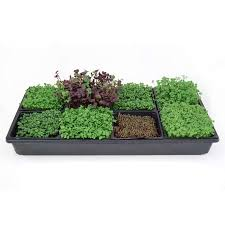 indoor gardening supplies. Hydroponic Sectional Microgreens Growing Kit - Grow Micro Greens \u0026 Herbs Indoor Gardening: All Supplies Gardening