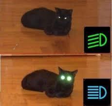 <b>Cat</b> eyes Headlights #<b>cat</b> #<b>lights</b> #joke | <b>Funny</b> animal pictures, <b>Cats</b> ...
