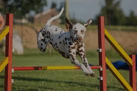 think pawsitive motivational dog