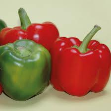 Gardeners Kitchen Pepper Beauty Bell Gardeners Kitchen Grow Your Own Bell Pepper