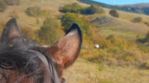 Image result for horses on the tratturo
