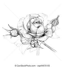 Roses Hand Drawn Pencil Flowers Roses Drawn With A Pencil On A