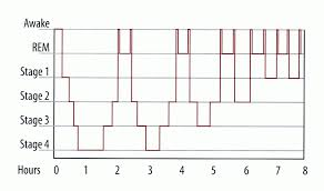 Ideal Sleep Cycle Chart Sleep Cycle Chart Busby Naturopathics New Farm 4005