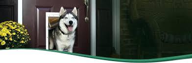 wall mounted doggie door through the wall doors door wall entry wall mounted pet door reviews