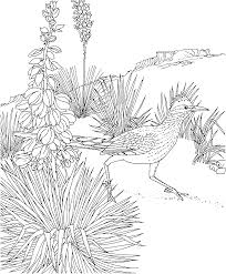 Free Printable Coloring Page New Mexico
