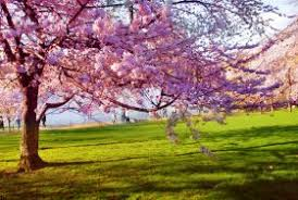 Resultado de imagen para imagenes de astenia en primavera