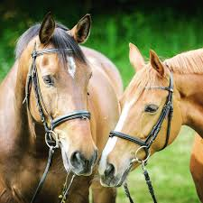 wild white horses running free. Brilliant Horses Selective Focus Photography Of Two Brown Horses For Wild White Horses Running Free H