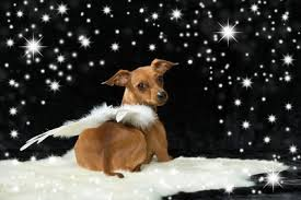 Hundesprüche Zum Abschied Schöne Sprüche Und Zitate Alles Dogde