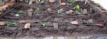 garden soaker hose. Drip Irrigation Vs Soaker Hose Garden