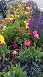 tulip garden liberty state park jersey city nj