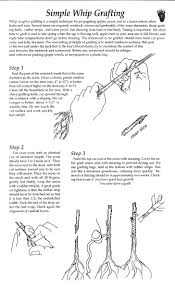 Fruit Tree Grafting And Beekeeping Updates Good News  YouTubeHow To Graft Fruit Trees With Pictures
