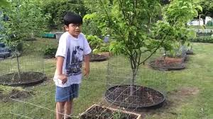 the best garden cage how to protect vegetables herbs u plants pics for keep dogs out