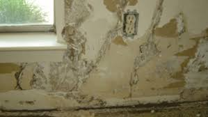 termite damage to drywall and how to