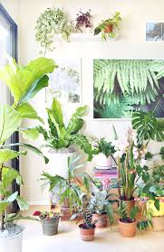 sun light requirements for most house plants if i have one tip this is it give your indoor plants the brightest place possible but keep them out of