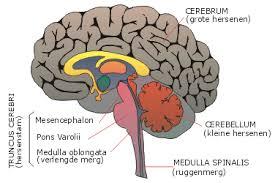 Wat is de behandeling voor de hersenen aneurysma?