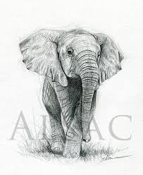 baby elephant drawings. Interesting Elephant In Baby Elephant Drawings A