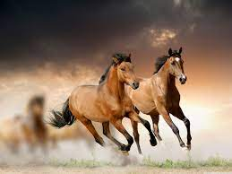 Horses Running Wallpapers - Top Free ...