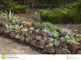 drought resistant gardening using succulents with rock border