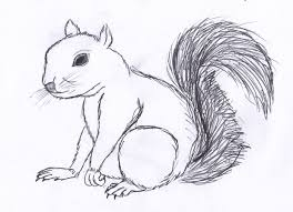 Small Picture Easy Ways to Draw a Squirrel with Pictures wikiHow with Squirrel