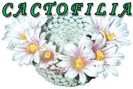 Cactofilia - La famiglia delle Agavacee