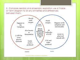 Venn Diagram Template Google Docs Four Circle Diagram Template Venn Arlingtonmovers Co