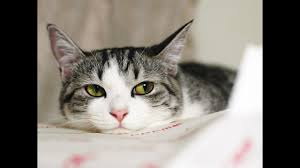 cute cat pictures hd wallpapers
