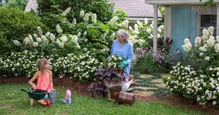 video scentamazing gardenia