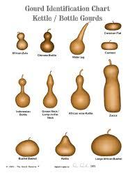 Gourd Identification Chart Gourd Identification Charts