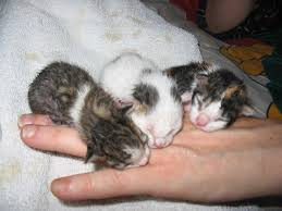 cute baby cats for sale. Interesting Cute Baby Kittens Cute Baby Kitten Inside Cute Cats For Sale Y