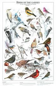 Garden Birds Winter Poster Identification Chart Eastern Birds